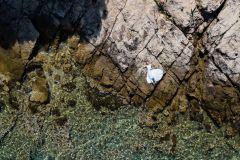 Wedding organizer Murter - Wonderful Weddings in Croatia - W²